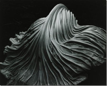 EdwardWeston_thumb[2]